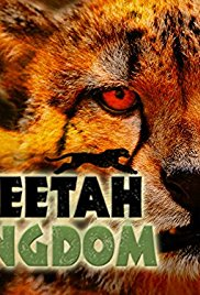 Cheetah Kingdom